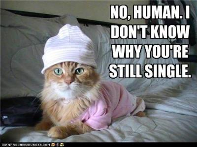 funny-pictures-no-human-i-dont-know-why-youre-still-single