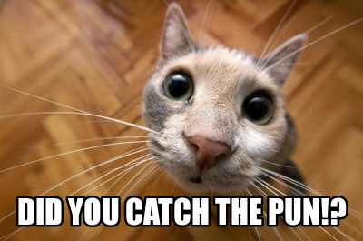 Cat memes. The first step to celibate happiness.