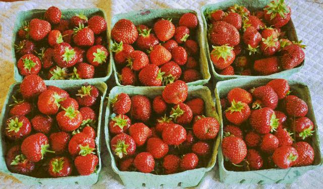 fresh-picked-strawberries-web