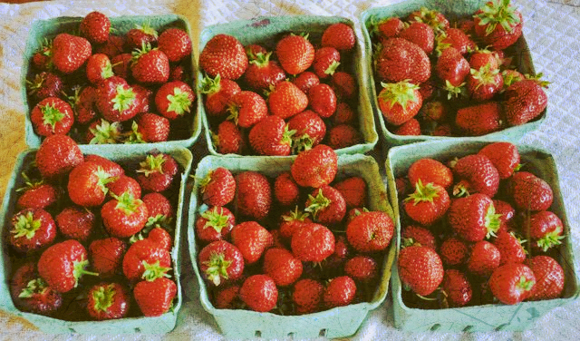 fresh-picked-strawberries-web